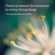 """""""Hay recompensa por mostrar compasión (bondad) hacia cualquier ser viviente"""". Profeta Muhammad, saws."""
