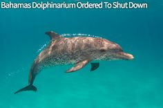 Bahamas dolphinarium wrongly given the go-ahead, gets shut down. Victory for the dolphins.