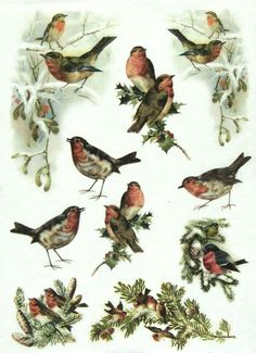 Ricepaper/ Decoupage paper, Scrapbooking Sheets /Craft Paper  Winter Birds