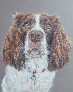 English Springer Spaniel Dog Greeting Card - Artist Colour Pencil Print Willow - Blank Any Occasion Wildlife Paintings, Animal Paintings, Animal Drawings, Pet Drawings, Pencil Drawings, Color Pencil Picture, Hunting Art, English Springer Spaniel, Spaniel Dog