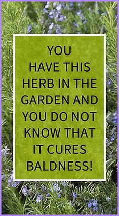 You have this herb in the garden and you do not know that it cures baldness – Herbal Medicine Book Medicine Book, Herbal Medicine, Natural Medicine, Health And Fitness Articles, Health And Nutrition, Fitness Tips, Health Fitness, Health Guru, Health Facts