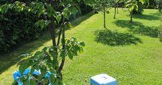 nurmikon rajaaminen - etsitkö siistiä ja käytännöllistä tapaa rajata nurmikko? Katso vinkkejä nurmikon reunanauhan ja kivetyksen käyttämiseen >> Gardening, Outdoor Decor, Garden, Houses, Lawn And Garden, Urban Homesteading, Horticulture