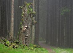 trollskog norge - Sök på Google