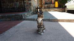#cyprus #cyprus_cats #кипр_котики #кипр #фото_кипр #путешествие_кипр #монастырьфеклы #agiathekla