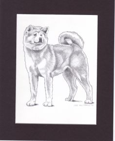 This is a pencil drawing I did of a Red Akita Inu that I will donate to the annual Akiho dog show.