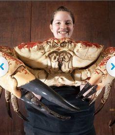 200 Best Crustaceans Fresh Salt Water Land Images Crustaceans Sea Creatures Ocean Creatures