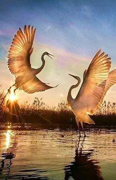 Birds in flight Pretty Birds, Beautiful Birds, Animals Beautiful, Wildlife Photography, Animal Photography, Vogel Illustration, Animals And Pets, Cute Animals, Tier Fotos