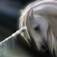 Unicorns are courageous loyal and fearless companions. They cannot be owned, nor commanded, one must wait to be chosen.