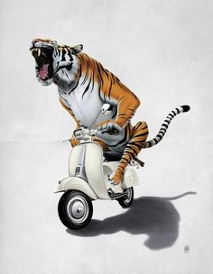 With #vespa you are like a tiger!