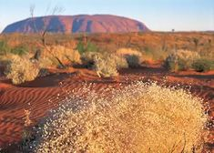 Best Time to Visit Australia Climate Guide Audley Travel Australia Tours, Visit Australia, Australia Travel, Audley Travel, Visit Sydney, New Zealand North, South Island, Great Barrier Reef, Vacation