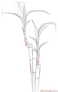 how to draw bamboo step by step easy