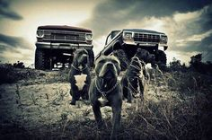 Pitbulls & Mud Trucks