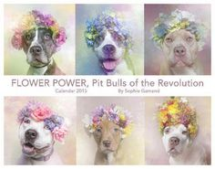 Flower Power Calendar benefits Sean Casey Animal Rescue, Second Chance Rescue and Animal Haven. Please buy & share!!!