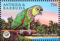 Maroon-tailed Parakeet stamps - mainly images - gallery format