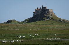Holy Island, Northumberland | Flickr - Photo Sharing! Dominic Scott Photography