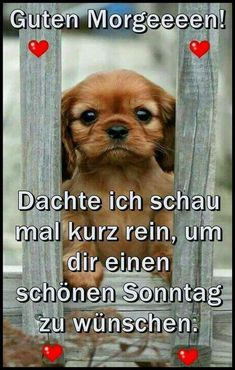 Guten morgen good day, good morning wishes, good morning quotes, baby animals, Good Morning Quotes For Him, Good Morning Wishes, Good Day Song, Morning Humor, Funny Morning, Morning Greeting, Leadership Quotes, Happy Sunday, Baby Animals