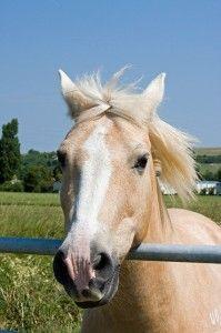 Pferdeleckerlis selber machen - Anleitung
