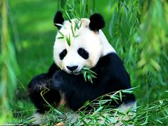 Beijing Zoo: The zoo is home to around 450 different species and has a population of some 5,000 animals. Some of the most popular attractions among visitors are the wild and rare animals of China itself, such as the pandas, golden monkeys, milu deer and northeast tigers.