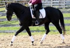 Ready? Steady! (Or How to Ride Clamly and With Consistency) - Horse Listening