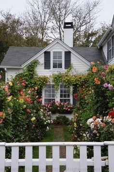 Flower garden galore