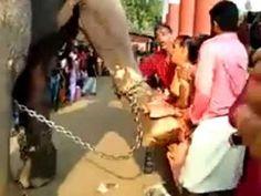 ആനയെ തൊടാന് ആഗ്രമുള്ളവര് സുക്ഷികുക| Don't try to touch elephants Latest Video, Elephants, Touch, Elephant