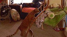 """Babysitter kitty says, """"I think I gotz it purring."""""""
