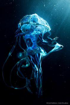 glowing jellyfish - Google Search