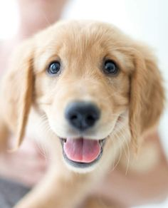 Dash & Albert -- RUG COMPANY... fun  Dog Photos @Kellie Nolen