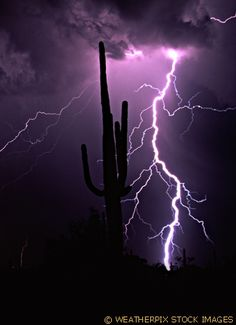 Lightning forks to the ground behind a saguaro cactus during a monsoonal thunderstorm in the sonoran desert near Florence Arizona. Tornados, Thunderstorms, Thunder And Lightning, Lightning Storms, Severe Weather, Extreme Weather, Ranch Vacations, Wild Weather, Lightning Strikes