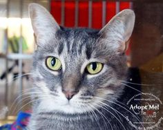 Chelsea was adopted!