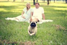 Maternity photo shoot with dog