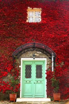 I once lived in an apartment that had the same kind of leaves, that would turn bright red in the fall. Warm fuzzies everytime I see a wall full of them.