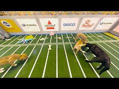 You Know What's Better Than The Puppy Bowl? Puppy Bowl VR I Fast Company