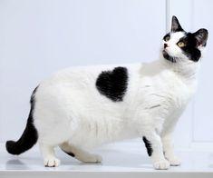 telegraphcat-heart_1849648i