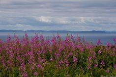 Flowers and Ocean, Fortune Newfoundland by Ben Stacey Newfoundland And Labrador, Alaska, Folk Art, Coast, Canada, Ocean, Explore, Flowers, Photography
