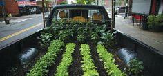 Garden on wheels.