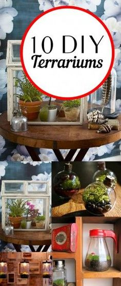 DIY Terrarium, Indoor Gardening, Gardening Hakcs, Easy Gardening, Gardening Hacks, Simple Gardening TIps, Popular Pin, DIY home, DIY Home Decor