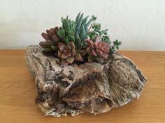 Succulent Driftwood Home Accent Decor Centerpiece by MakerDyer