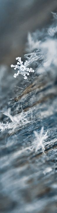 New Photography Winter Nature Ice Crystals Snow Flake 63 Ideas