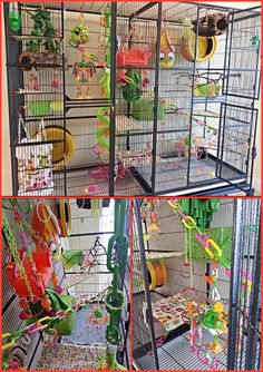 Cage for 4 sugar gliders Sugar Glider Toys, Sugar Glider Cage, Pet Rat Cages, Pet Cage, Guinea Pig Toys, Guinea Pigs, Reptile Enclosure, Reptile Cage, Pets