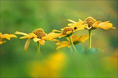 Blumen im August - Jahreszeiten - Galerie - Community