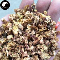 La Mei Hua 腊梅花, Winter Sweet Flower, Flos Chimonanthi Praecocis Traditional Chinese Medicine, Flower Tea, Medicinal Herbs, Herbalism, Stuffed Mushrooms, Winter, Sweet, Flowers, Food