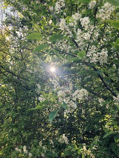 Whispering Trees and Forget-Me-Not Skies: Finding Wildflowers in April | Wild Library Irish Landscape, Chestnut Horse, Aspen Trees, Forget Me Not, Growing Tree, New Perspective, Far Away, Wildflowers, Deities