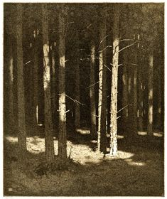 In the Forest (Alfred Hartley) Aquatint, printed in brown ink