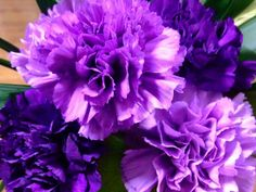 Cravo púrpura: Antipatia, capricho