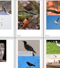 Gratis Download: Quiz- und Partyspiel Vögel erraten. Viel Spaß damit ;-) Gratis Download, Party, Bird, Kid Games, Birds, Parties