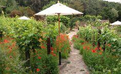 2014 BBY - a walk through zinfandel grapes on the way to the vegetable garden Garden Crafts, Plants, Plant Sale, Backyard Garden, Master Gardener, Ornamental Plants, Garden Tours, Patio Umbrella, Backyard