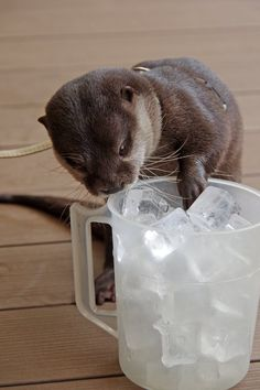 Otter searches for the perfect cube