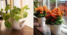 Feng Shui, Outdoor Gardens, Home And Garden, Flowers, Plants, Gardening, Decoration, Shopping, Decor