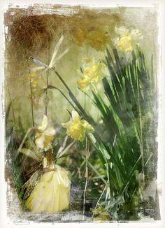 Charlotte Bird - Fairy with daffodils Baby Fairy, Love Fairy, Fantasy World, Fantasy Art, Bird Graphic, Kobold, Unicorns And Mermaids, Beautiful Fairies, Watercolor Artwork